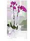 Fusya orkide anlami
