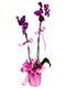 mor orkide anlami