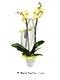 sari orkide anlami
